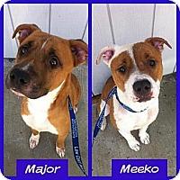 Adopt A Pet :: Meeko - Orange Cove, CA