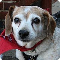 Adopt A Pet :: Missy Halifax - Waldorf, MD