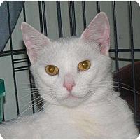 Adopt A Pet :: Precious - Stafford, VA