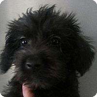 Adopt A Pet :: MORTICIA - Silver Lake, WI