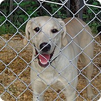 Adopt A Pet :: Swift - Frankfort, KY