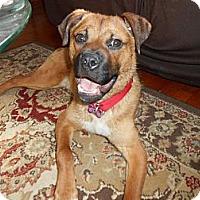 Adopt A Pet :: Reuben ~ Adoption Pending - Youngstown, OH