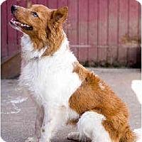 Adopt A Pet :: Wilson - Portland, OR