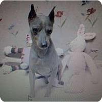 Adopt A Pet :: Adopt me! - Inglewood, CA