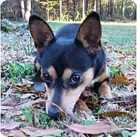 Adopt A Pet :: Charly - Mocksville, NC