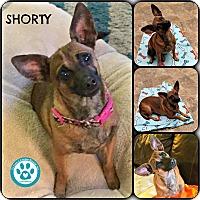 Adopt A Pet :: Shorty - Kimberton, PA