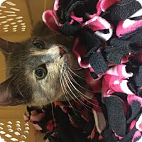 Adopt A Pet :: Penny Lane - Little Rock, AR