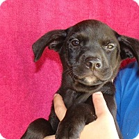 Adopt A Pet :: Indy - Oviedo, FL