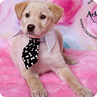Adopt A Pet :: Harry - Danbury, CT