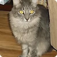 Adopt A Pet :: Gracie - Melbourne, FL