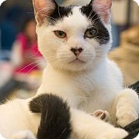 Adopt A Pet :: Jethro - New York, NY