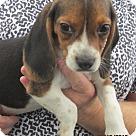 Adopt A Pet :: Ginny