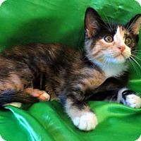 Adopt A Pet :: Ella - St. Louis, MO