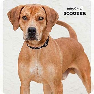 Hound (Unknown Type) Mix Dog for adoption in Wichita, Kansas - Scooter