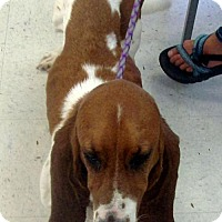 Adopt A Pet :: AUBIE - ADOPTION PENDING! - Pennsville, NJ