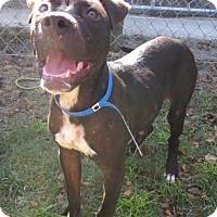 Adopt A Pet :: Frasier - Georgetown, SC