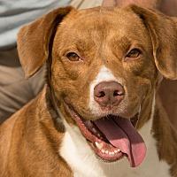 Adopt A Pet :: Honey - Myakka City, FL