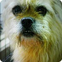 Adopt A Pet :: Champion - Casa Grande, AZ