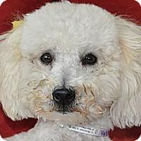 Adopt A Pet :: Tasha - Tumwater, WA