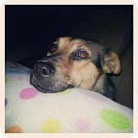 Adopt A Pet :: Burrita ~ Adoption Pending - Youngstown, OH