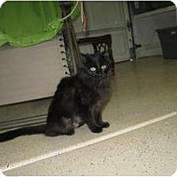 Adopt A Pet :: Gypsy - Phoenix, AZ