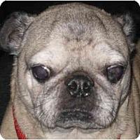 Adopt A Pet :: Bubba-NJ - Mays Landing, NJ