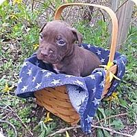 Adopt A Pet :: Male # 5 - Roaring Spring, PA