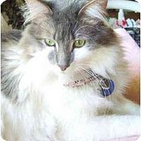 Adopt A Pet :: Bella Cheri - Beverly Hills, CA