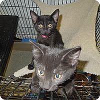 Adopt A Pet :: Clara - Medina, OH
