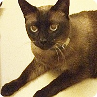 Adopt A Pet :: Tabitha - North Highlands, CA