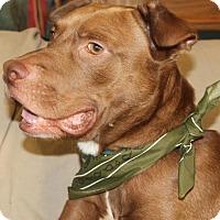 Adopt A Pet :: Walker - Rochester, NY