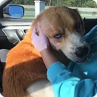 Adopt A Pet :: Zippy - BIRMINGHAM, AL