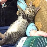 Adopt A Pet :: Fox - North Ogden, UT
