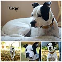 Adopt A Pet :: Oscar - Sioux Falls, SD