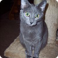 Adopt A Pet :: Ashleigh - Delmont, PA