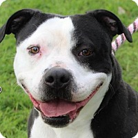 Adopt A Pet :: JENNY - Red Bluff, CA