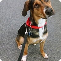 Adopt A Pet :: Raiden - in Maine - kennebunkport, ME