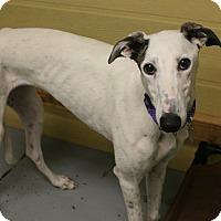 Adopt A Pet :: Ally - Santa Rosa, CA