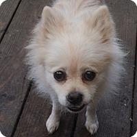 Adopt A Pet :: Jelly bean - conroe, TX
