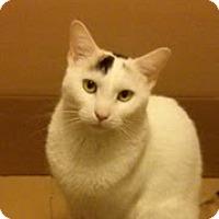 Adopt A Pet :: Damien - New york, NY