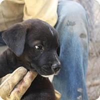 Adopt A Pet :: Doc - Tucson, AZ