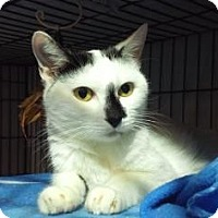 Adopt A Pet :: Asuka - New York, NY