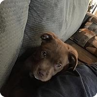 Adopt A Pet :: Jersey - Sacramento, CA