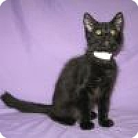 Adopt A Pet :: Alacazam - Powell, OH