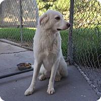 Adopt A Pet :: Princess - Fort Collins, CO