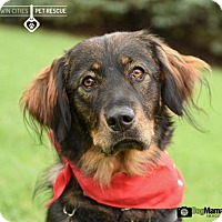 Adopt A Pet :: Emma - St Paul, MN