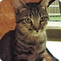 Adopt A Pet :: Oscar - Grants Pass, OR
