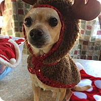 Adopt A Pet :: Dexter - Cleveland, OH