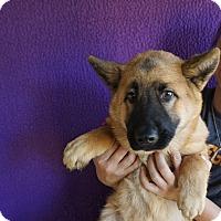 Adopt A Pet :: Fudge - Oviedo, FL