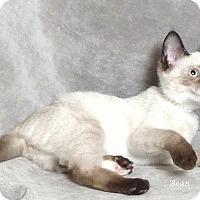 Adopt A Pet :: Beans - Kerrville, TX